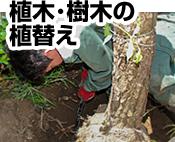 植木・樹木の植替え